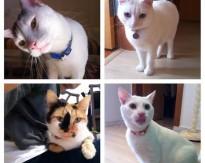 Milky, Bunny, Juninho e Bebel